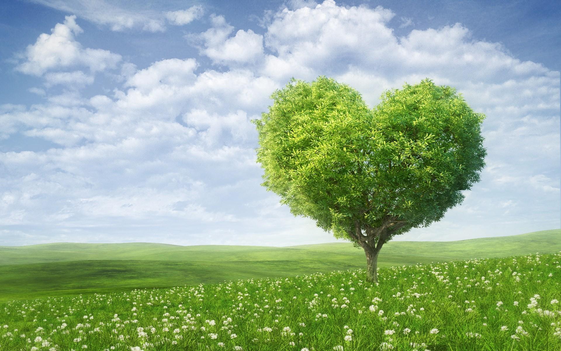 love-heart-1920x1200-tree-green-landscape-hd-4k-2366